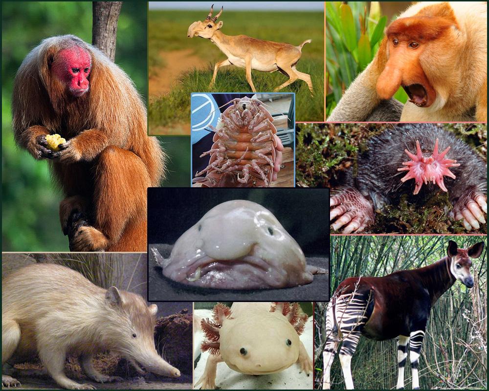 13 World's Weirdest Animals