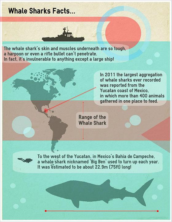 Similarities Between Whales & Sharks